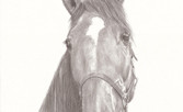 Pencil drawing of horse